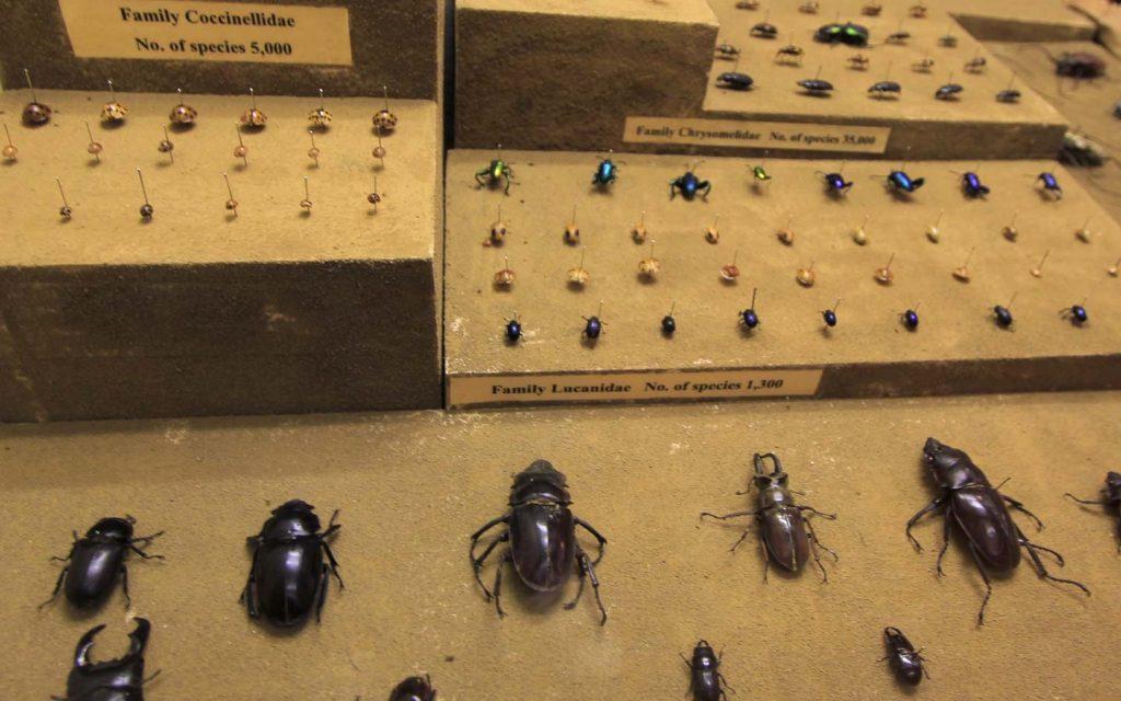 พิพิธภัณฑ์แมลง