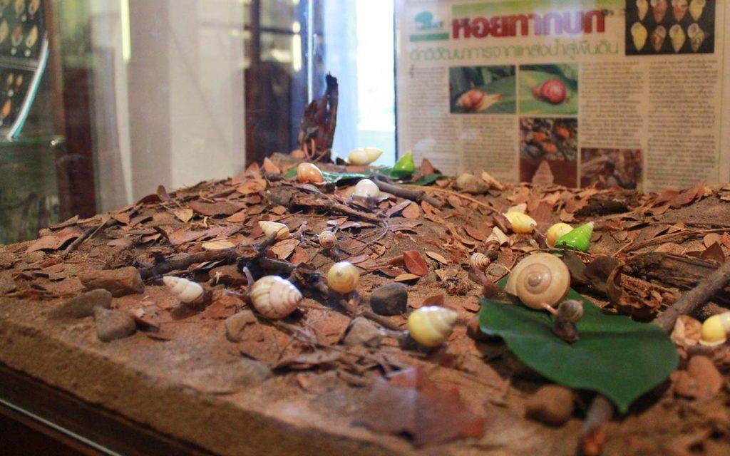 พิพิธภัณฑ์หอยทากของไทย