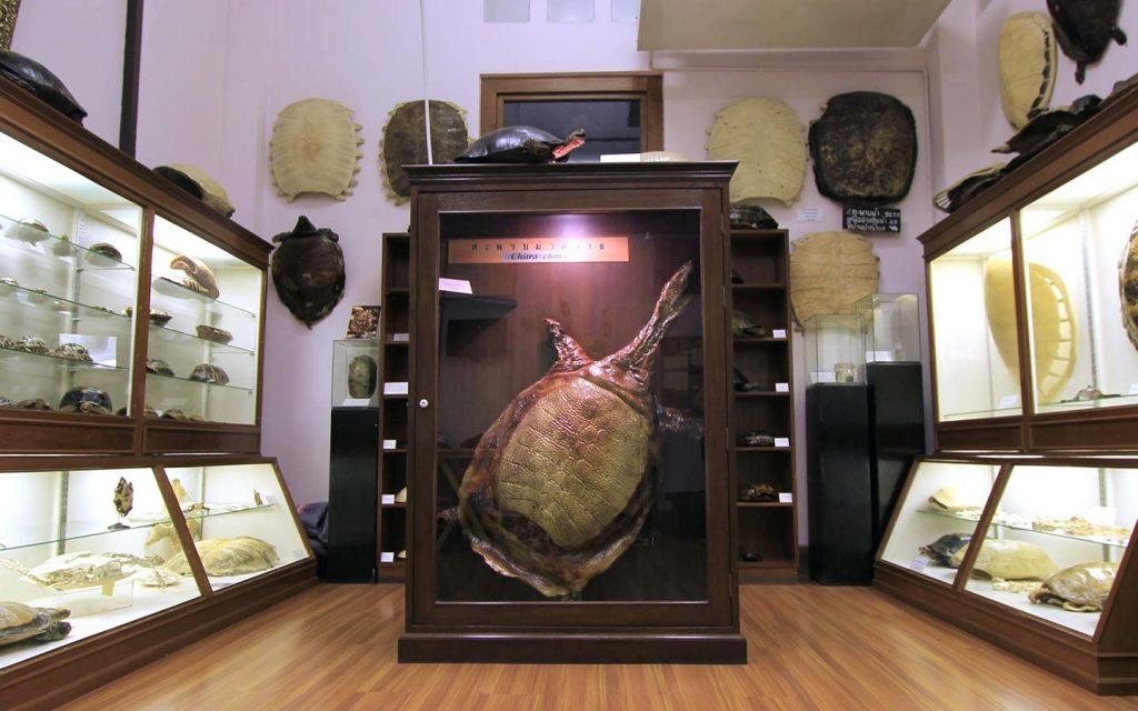 พิพิธภัณฑ์เต่าและตะพาบ