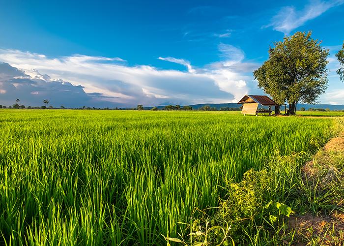 จุฬาฯ น้อมนำ เกษตรพอเพียง สู่ชุมชน