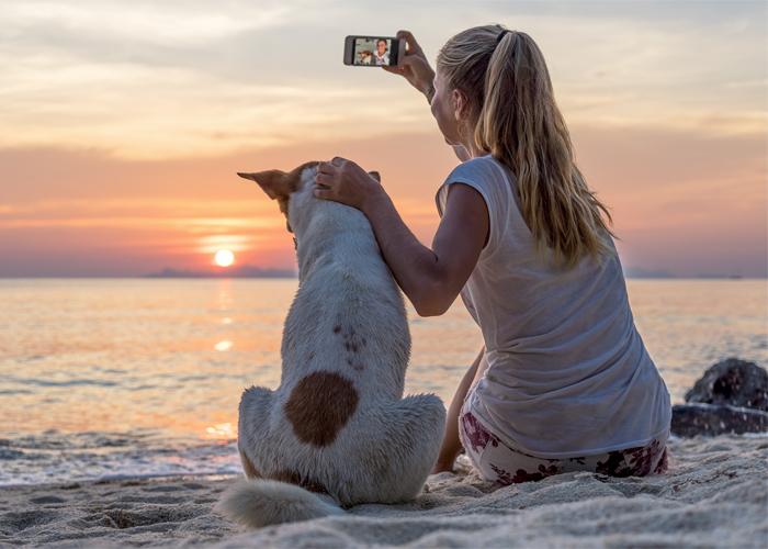 จัดระเบียบสัตว์เลี้ยง ขั้นแรกสู่ทางออกปัญหาสุนัขจรจัด