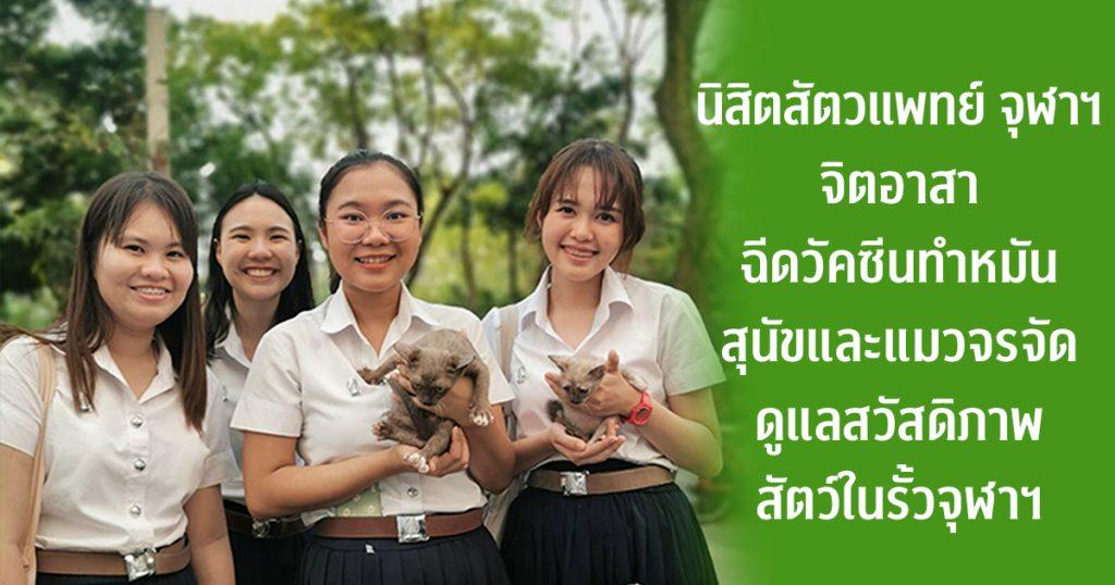 นิสิตสัตวแพทย์ จุฬาฯ จิตอาสา ฉีดวัคซีนทำหมันสุนัขและแมวจรจัด ดูแลสวัสดิภาพสัตว์ในรั้วจุฬาฯ