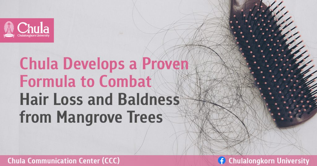 Chula Develops a Proven Formula to Combat Hair Loss and Baldness from Mangrove Trees