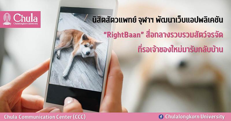 """นิสิตสัตวแพทย์ จุฬาฯ พัฒนาเว็บแอปพลิเคชัน """"RightBaan"""" สื่อกลางรวบรวมสัตว์จรจัด ที่รอเจ้าของใหม่มารับกลับบ้าน"""