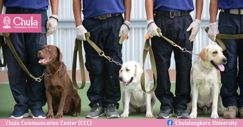 การใช้สุนัขดมกลิ่นหาผู้ติดเชื้อโควิด-19 ที่ไม่แสดงอาการ : นวัตกรรมการคัดกรองโรคจากความสามารถพิเศษของสุนัข