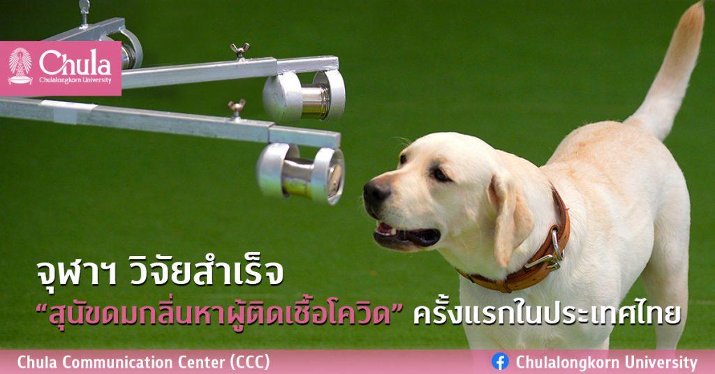 """จุฬาฯ วิจัยสำเร็จ """"สุนัขดมกลิ่นหาผู้ติดเชื้อโควิด"""" ครั้งแรกในประเทศไทย"""