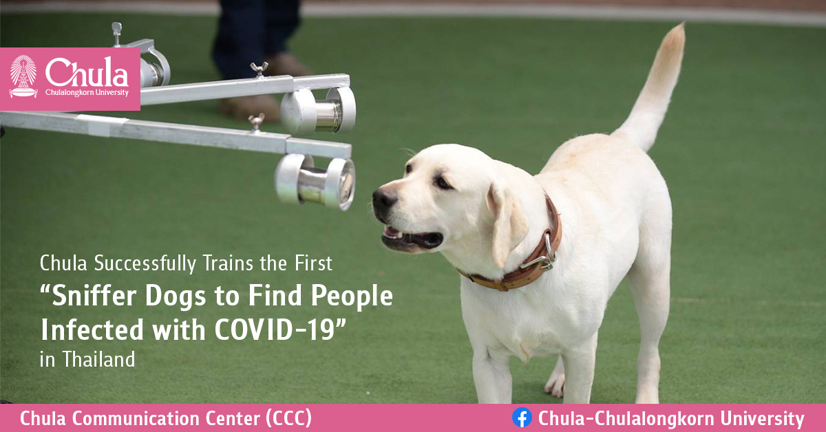 """Chula Successfully Trains the First """"Sniffer Dogs to Find People Infected with COVID-19"""" in Thailand"""